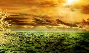 Sunbeam292987_960_720