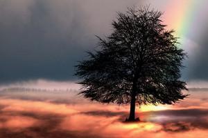 Tree2166193__340