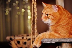 Cat1898682__340