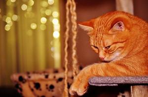 Cat1898688__340_2