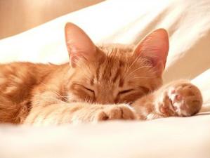Cat1558711__340