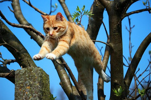 Cat1366118__340