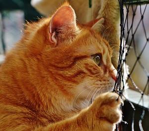 Cat1652843__340