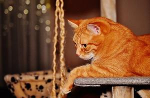 Cat1898692__340