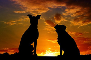 Dogs2222801__340