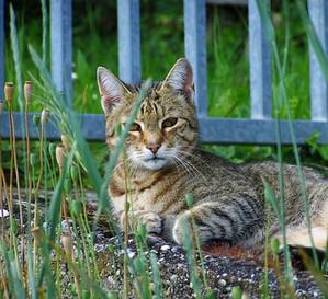 Cat1434373__340